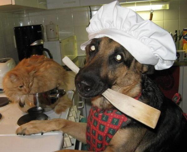 Cocinando gatos