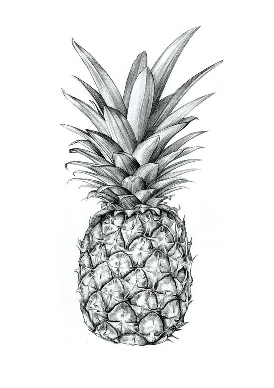 Pineapple Art Print By Sibling Amp Co Society6 Adult