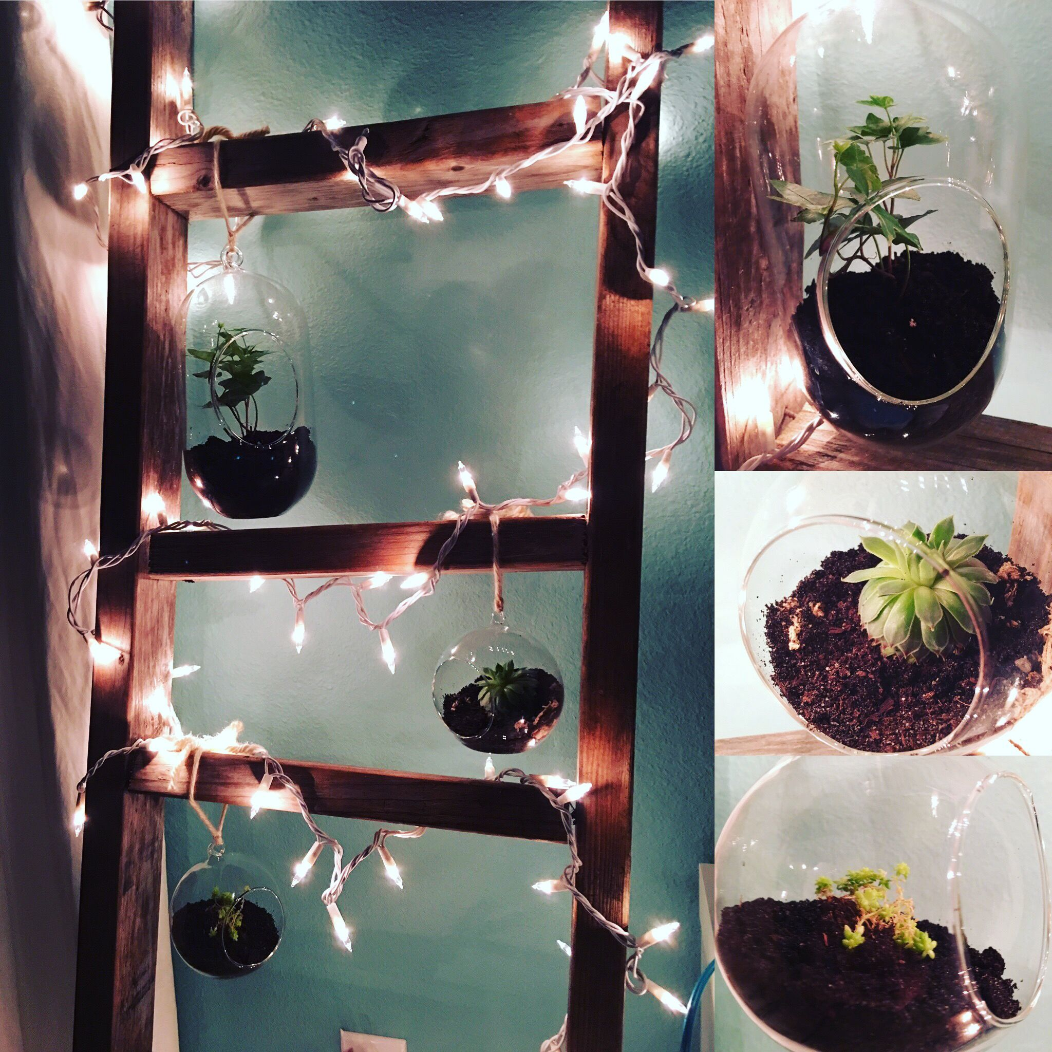 Terrarium garden succulents and ivy on old wooden ladder