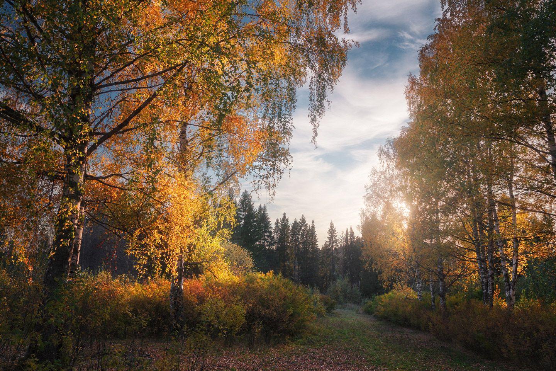 Обои тропа, осень, березы. Пейзажи foto 8