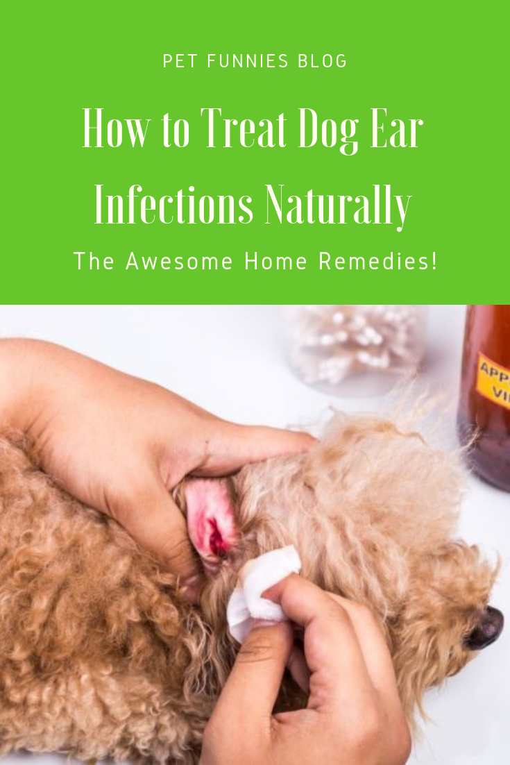 You can treat mild cases of dog ear infections at home ...