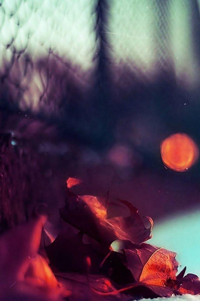 Beautiful Redwood Leaves Macro Blur #iPhone #4s #wallpaper
