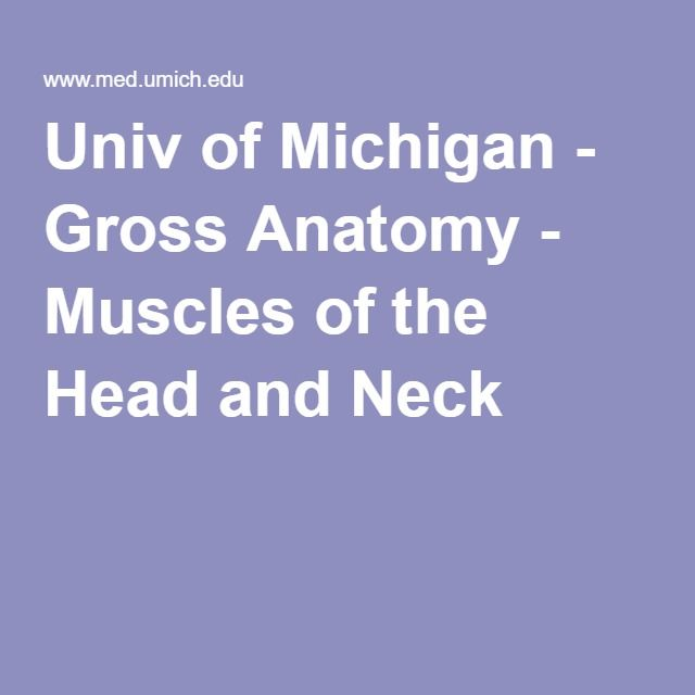 Univ of Michigan - Gross Anatomy - Muscles of the Head and Neck ...