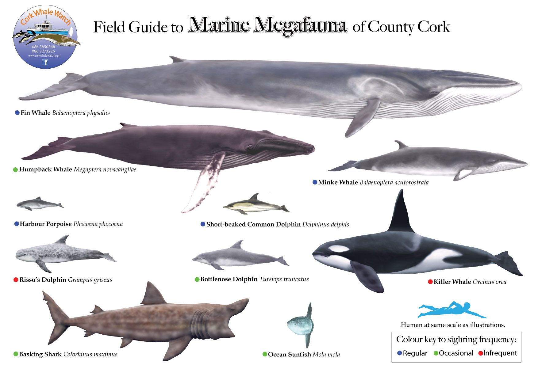 Whale Breeds