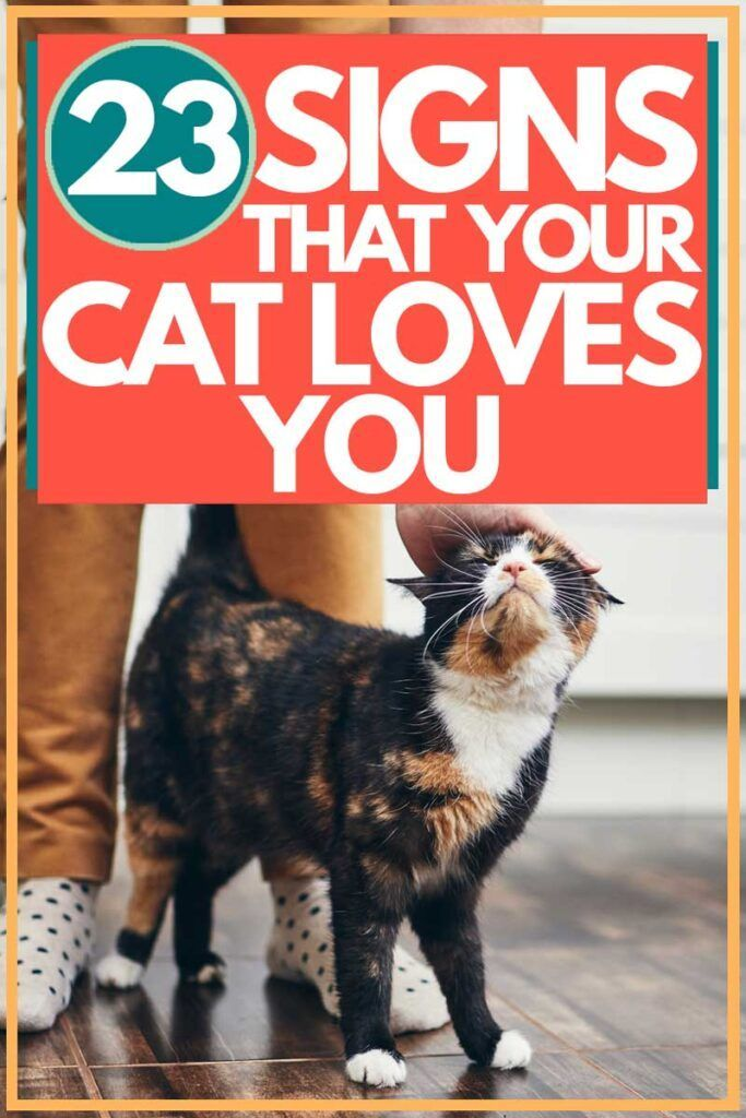 23 Signs That Your Cat Loves You. Article by TheCatSite.com. #TheCatSite #cat #cats #Kitten #Kittens #catsandkittens #catloverscommunity