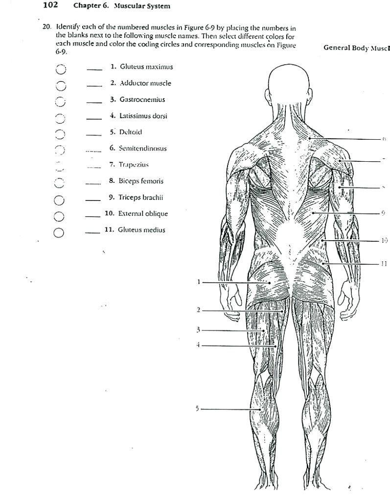 Pin On Human Figure Drawing Anatomy Reference