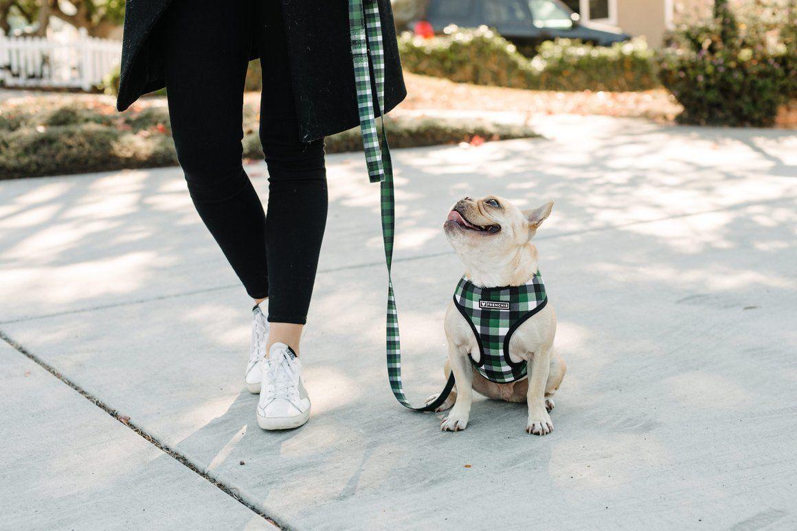 Frenchie Duo Reversible Harness Emerald Plaid Frenchie Bulldog