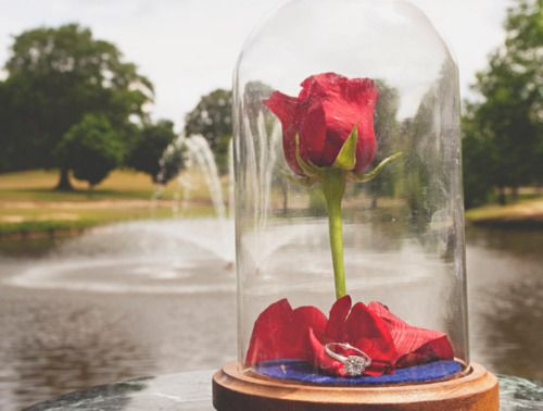 Beauty And The Beast Inspired Proposal Beauty And The Beast