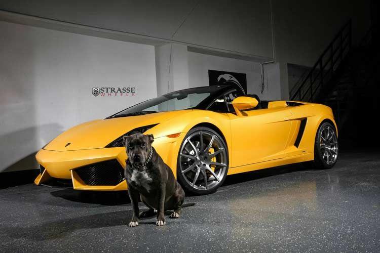 lamborghini gallardo - Yellow Lamborghini Gallardo Spyder Wallpaper