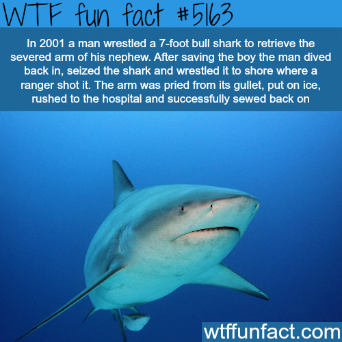 Man fights 7-foot bull shark - WOW! Jus WOW! ~WTF awesome ...
