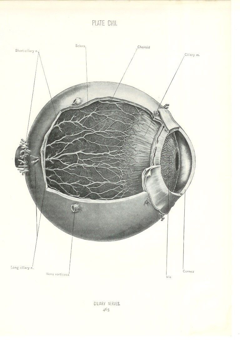 anatomy eye print - Google Search | BCY24 publicity - \'What do you ...