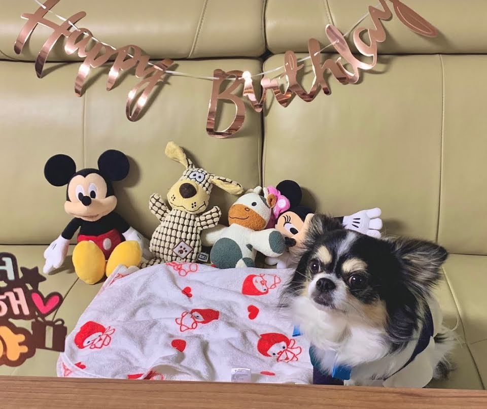 10 Adorable Idol Dogs We Have All Fallen In Love With In 2020 Dog Birthday Pretty Animals Kami