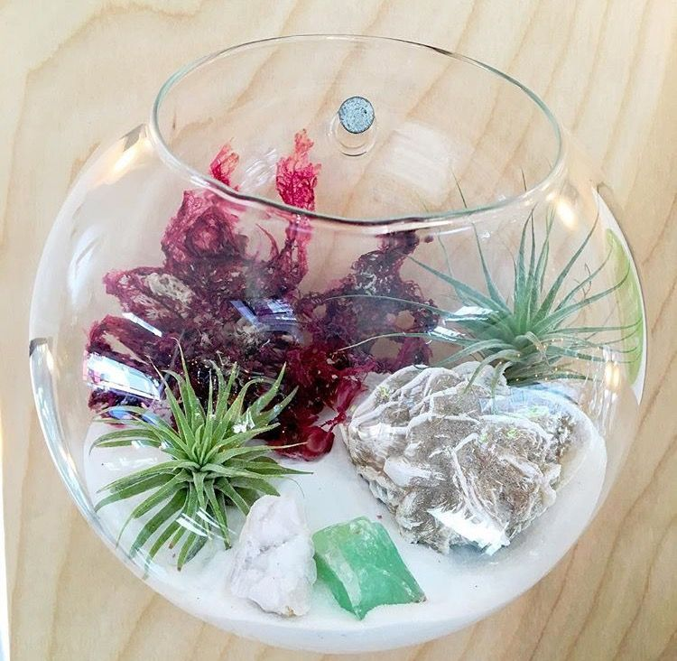 An Ocean Inspired Tillandsia Terrarium With Desert Rose And Green