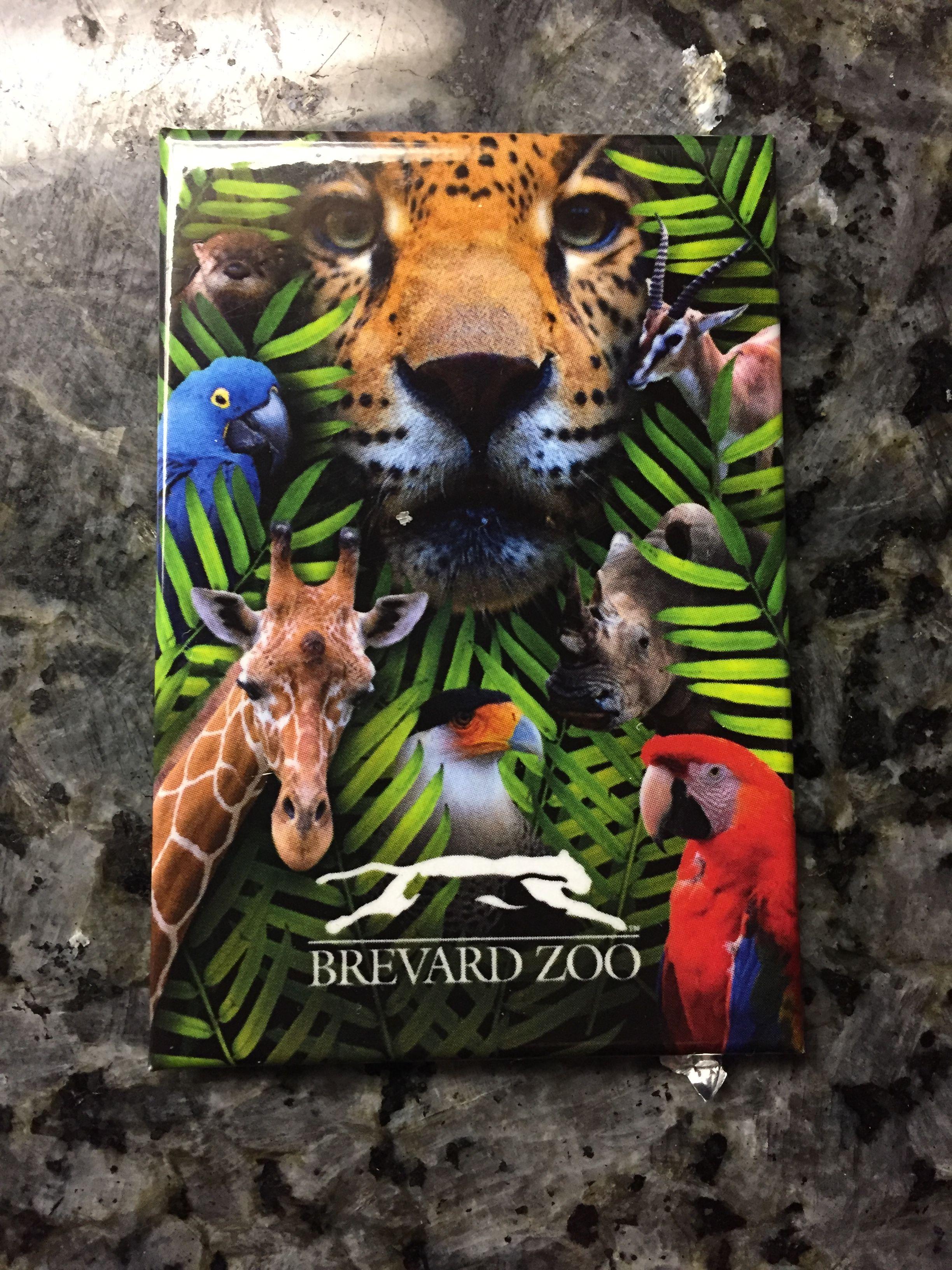 Brevard Zoo, Melbourne,Florida Brevard zoo, Zoo, Lion