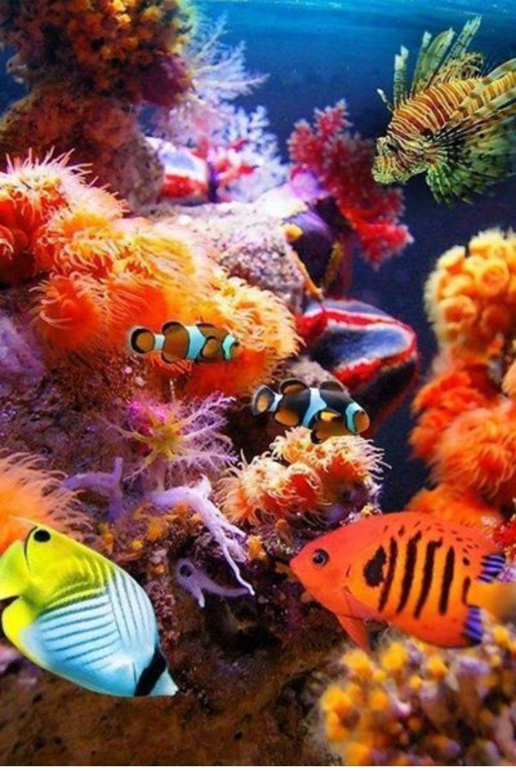Pin by Heidi Gnat on Under the Sea | Pinterest | Tropical beaches