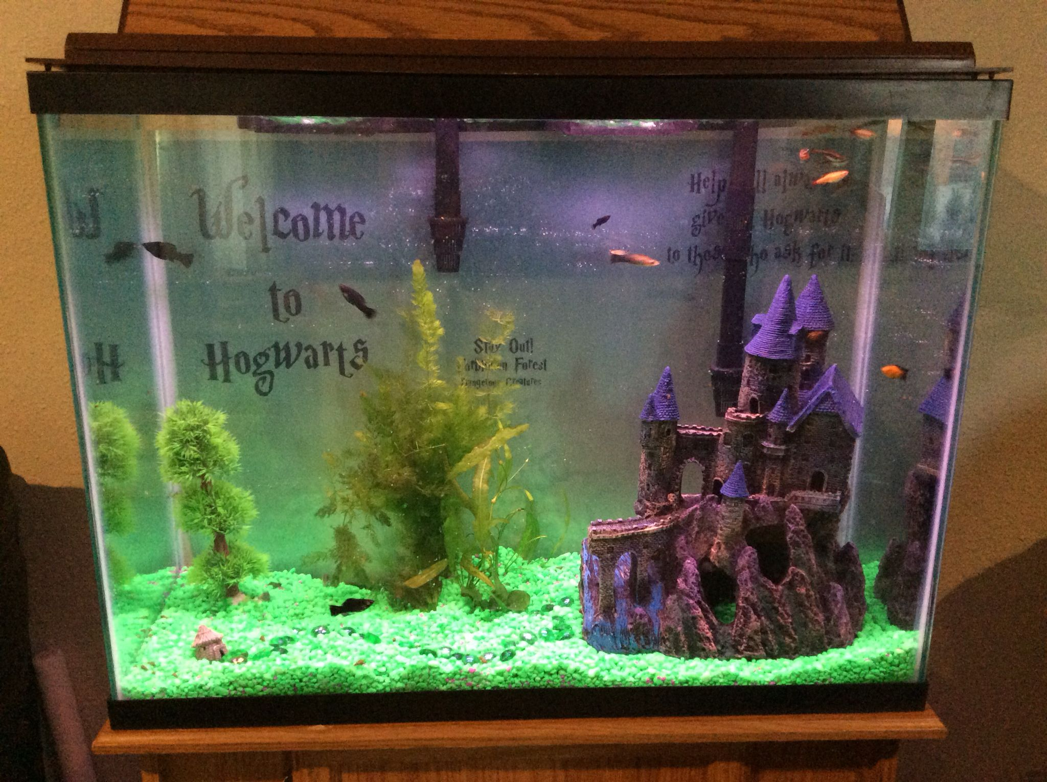 Harry potter fish tank harry potter pinterest fish for Harry potter fish tank