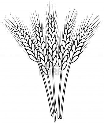 Tattoo épis de blé   Eveil   Wheat drawing, Outline ...