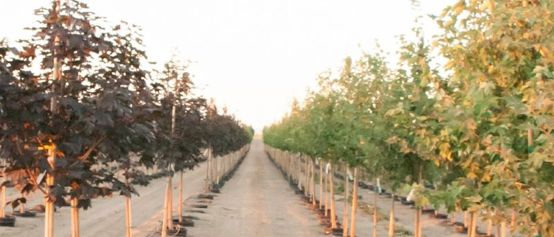 Garden Gate Nursery For Large Trees Open Twice A Year