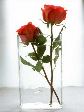 Photos Of Roses In A Vase
