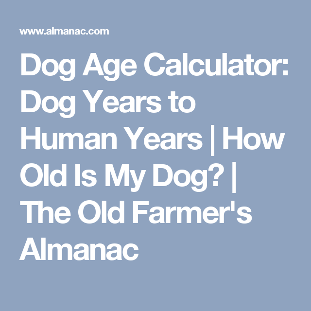 Dog Age Calculator Dog Years To Human Years How Old Is My Dog The Old Farmer S Almanac Dog Ages Dog Years Dog Age Chart