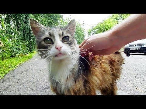 Stray Cat With Big Eyes Meows Loudly YouTube (With