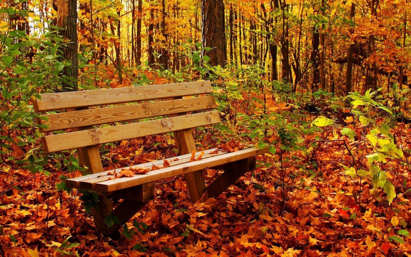 Обои красиво, осень. Природа foto 18