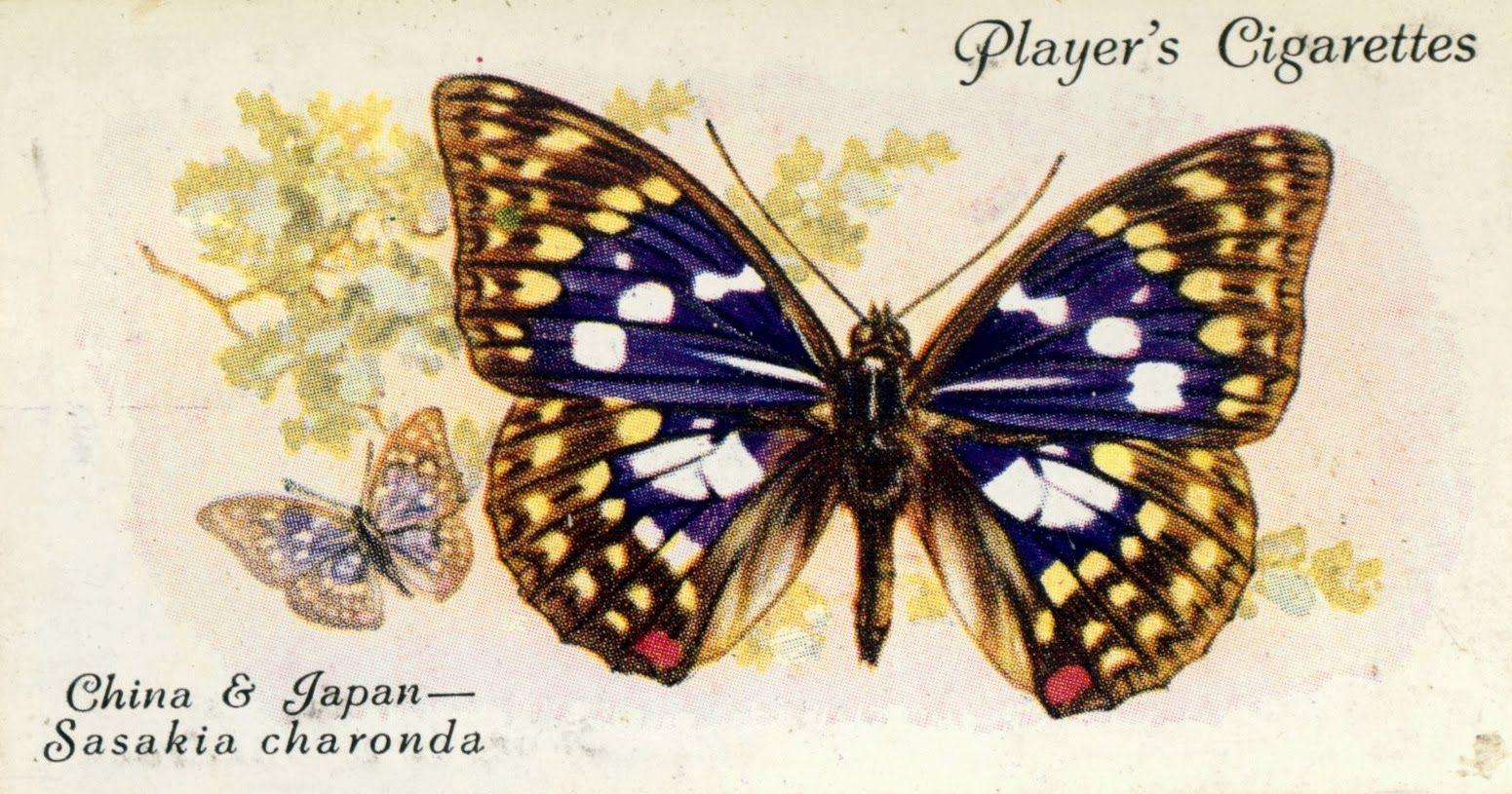butterfly46.cv.jpg (1551×815)