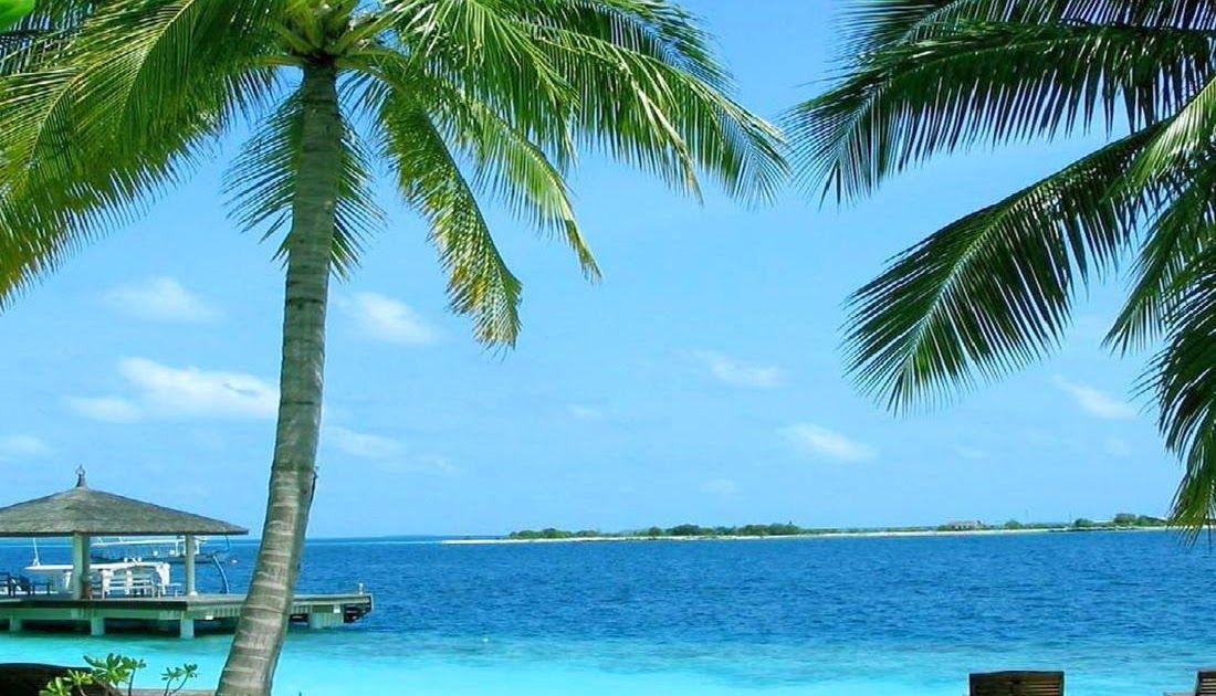 Gambar Animasi Pemandangan Pantai Pantai Gambar Animasi For Android Apk Download 120 Sketsa Gambar Pemandangan Alam Bagus Dan Berwa Pemandangan Pantai Gambar