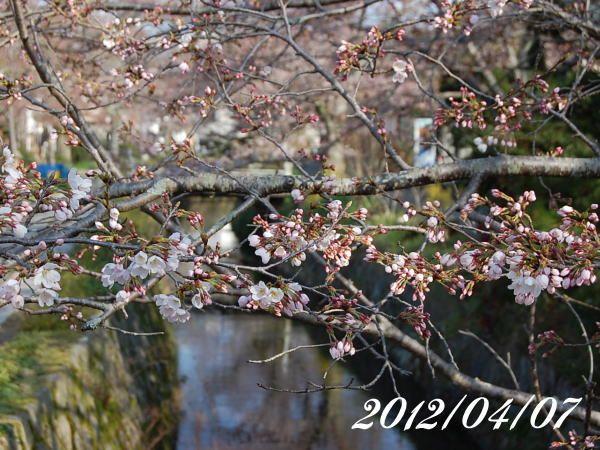 京都 哲学の道 桜 2012/04/07