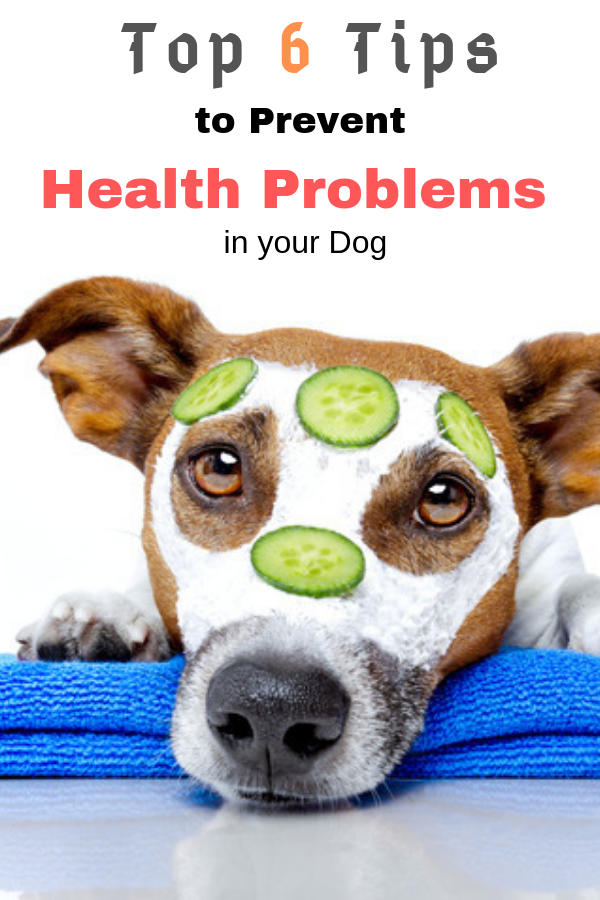 Top 6 Tips To Prevent Health Problems In Dogs Embrace Pet