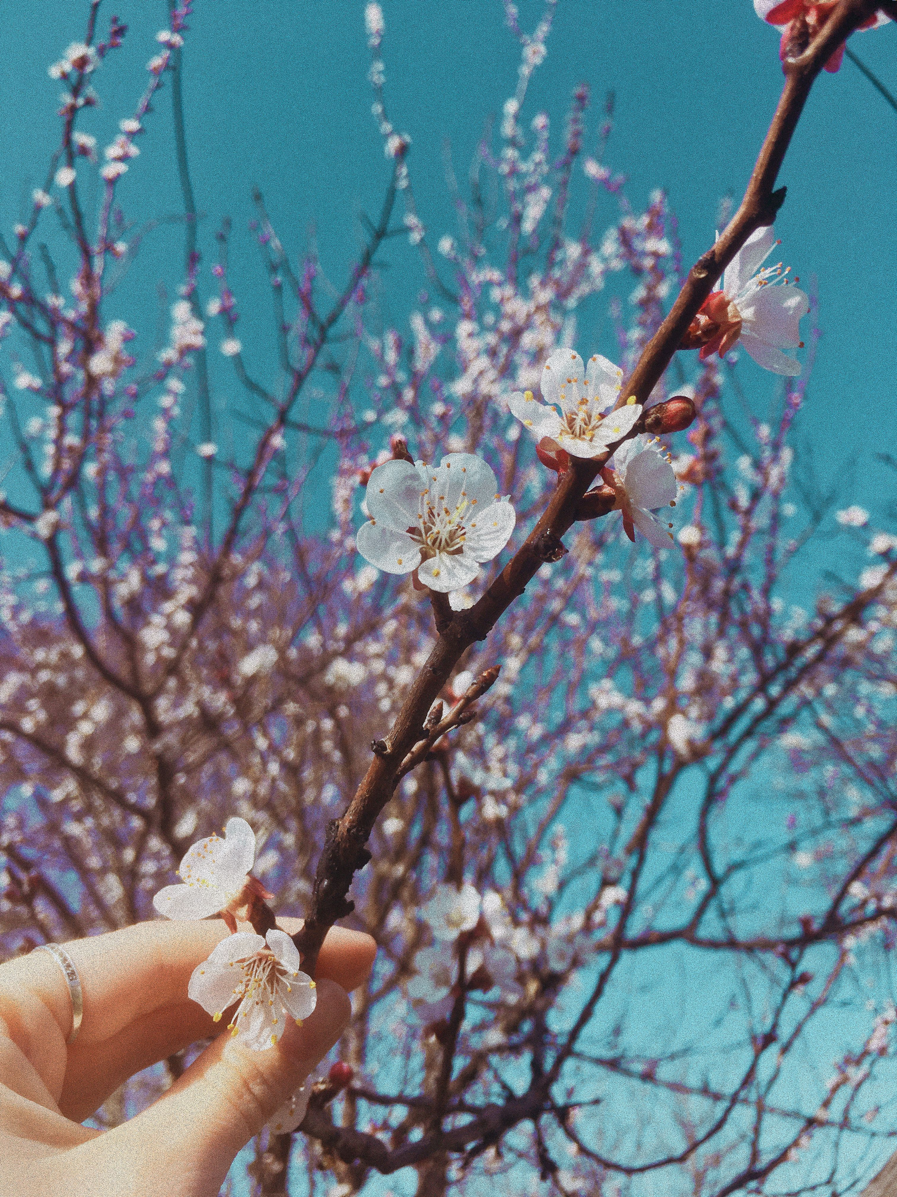 Весна. Цветы.