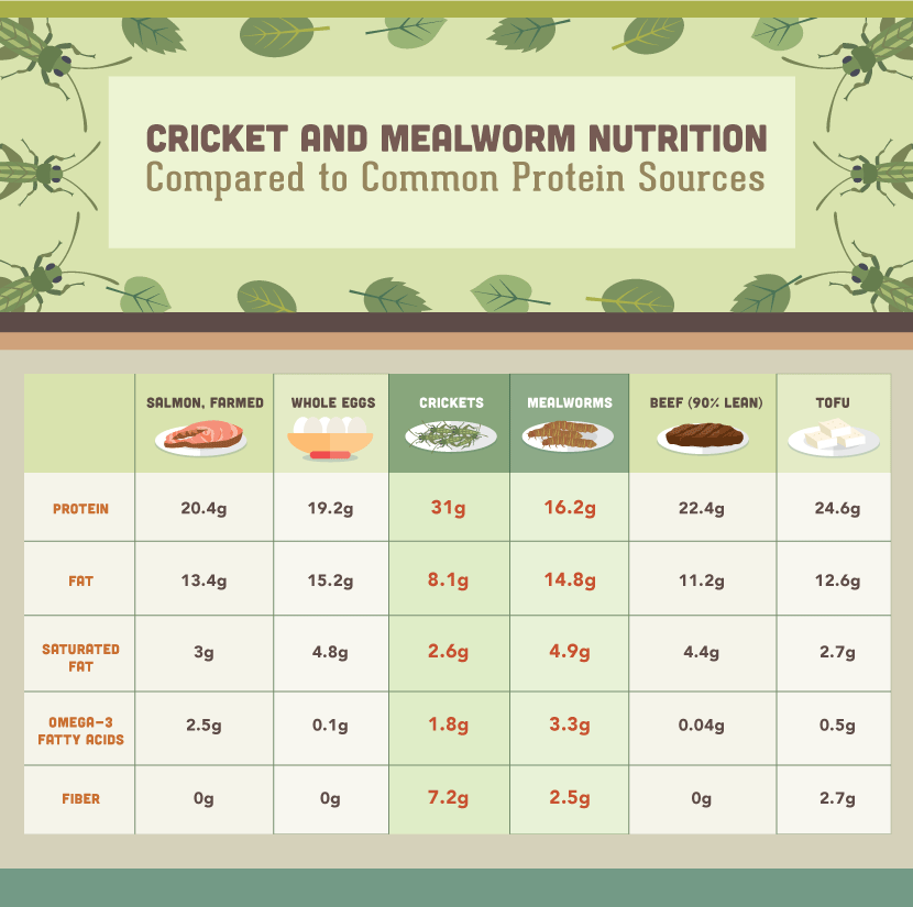 Eating Insects: Mealworm Nutritional Information