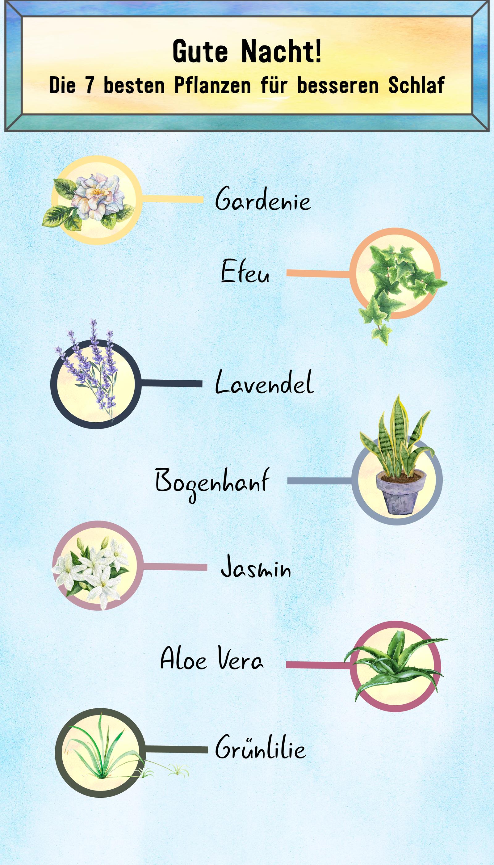 Pflanzen im Schlafzimmer Diese Sorten eignen sich in 2020