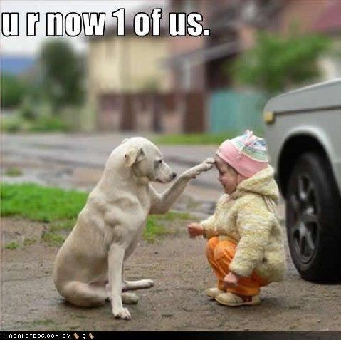 Ok You Boss Me Around And I Let You Because I Love You But I Am The Alpha Ok Animals Friends Cute Animals
