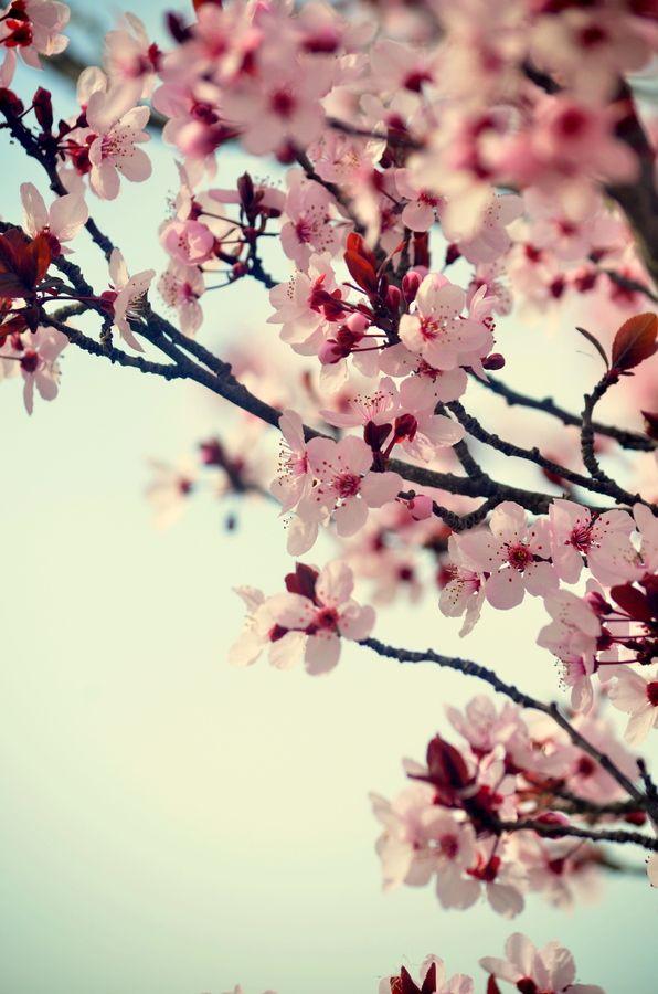 Spring Blossom Spring Blossom Spring Nature Blossom Trees
