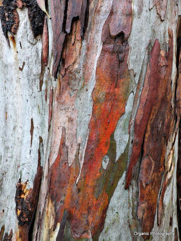Colourful Bark Of Gum Tree Nature Inspiration Amazing Art Art
