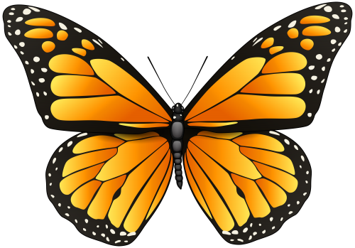 Orange Butterfly Png Clip Art Butterfly Images Clip Art Butterfly Drawing Butterfly Painting