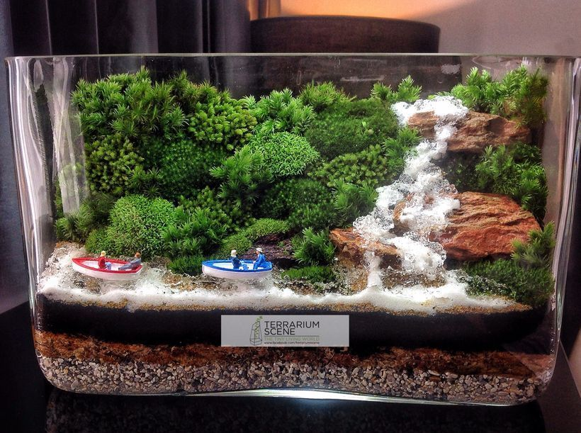 bonsai terrarium landscaping