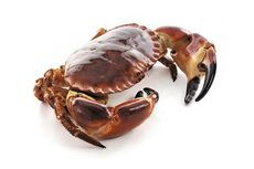 Dress brown crab pictures
