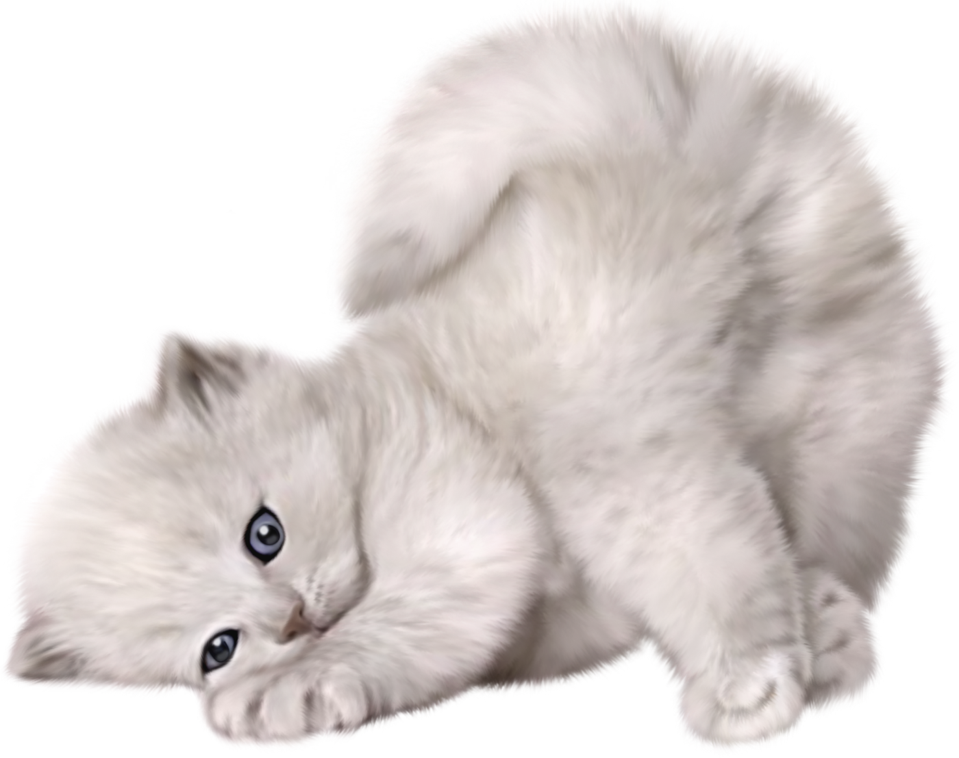 Large Png Cute Cat Picture Cute Cats Photos Kitten Images Cat Pics