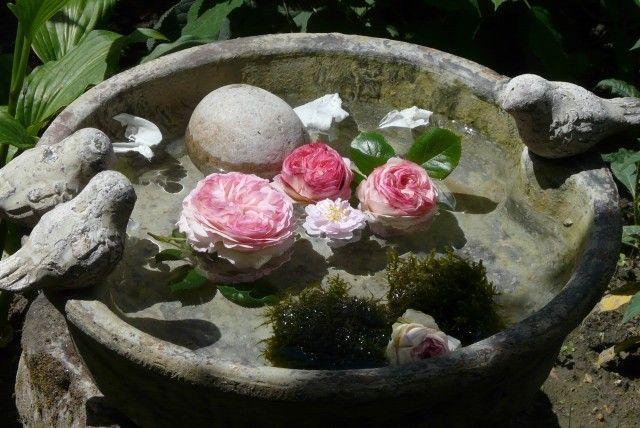 Ouverture du blog - Grange de charme Gardens, Plants and Garden ideas