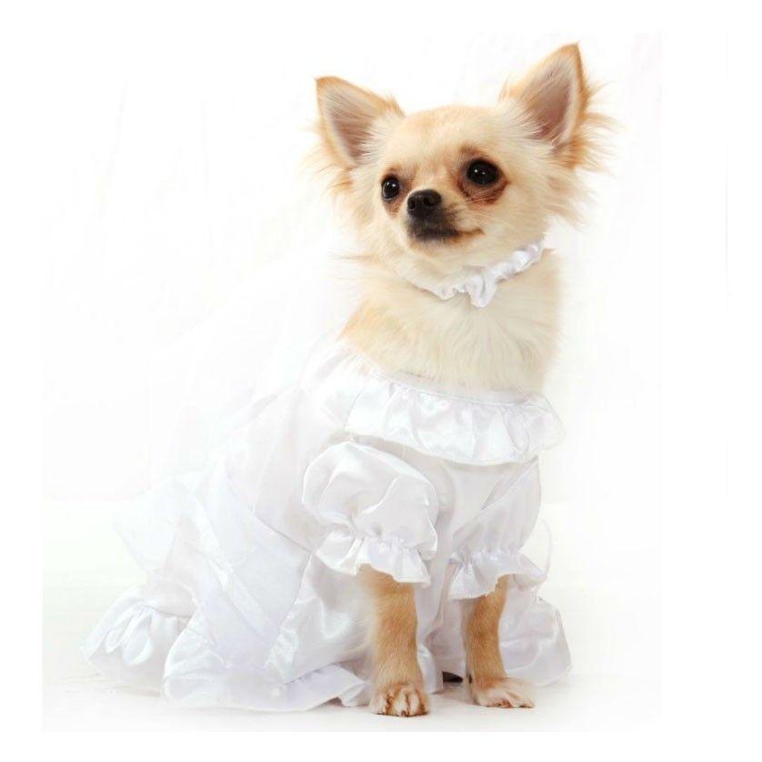 Ultimate Dog Pics Yahoo Image Search Results Dog Wedding Dress