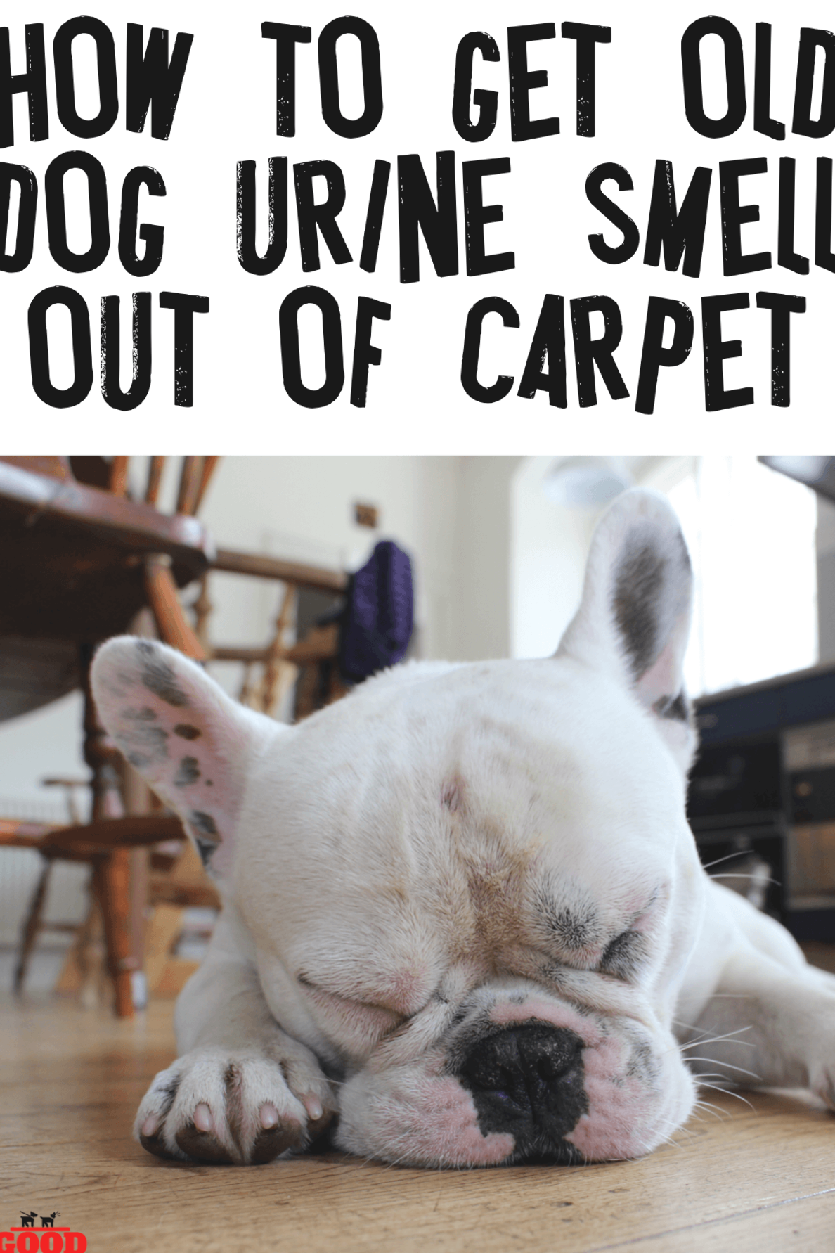 How To Get Old Dog Urine Smell Out Of Carpet Dog Pee Smell In The House Is Hard To Get Out Check Out These Pet Parent Cleanin In 2020 Dog Pee
