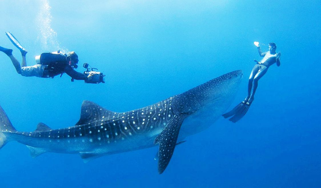 Best Scuba Diving Sites In The World Best Scuba Diving Swimming With Whale Sharks Scuba Diving