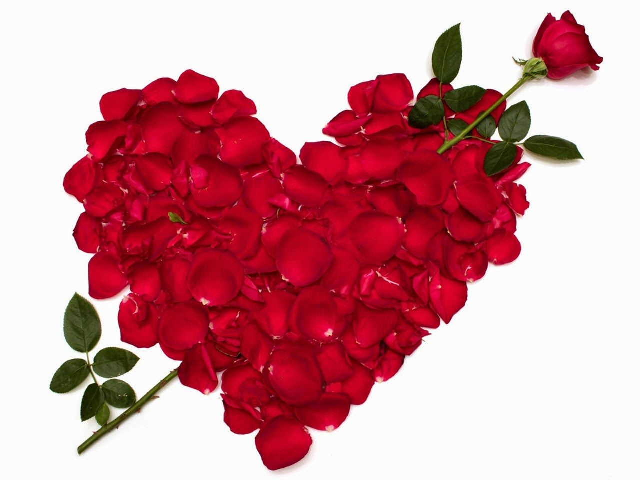 Happy Rose Day Hd Wallpapers 2018 Red Rose Petals Rose Day