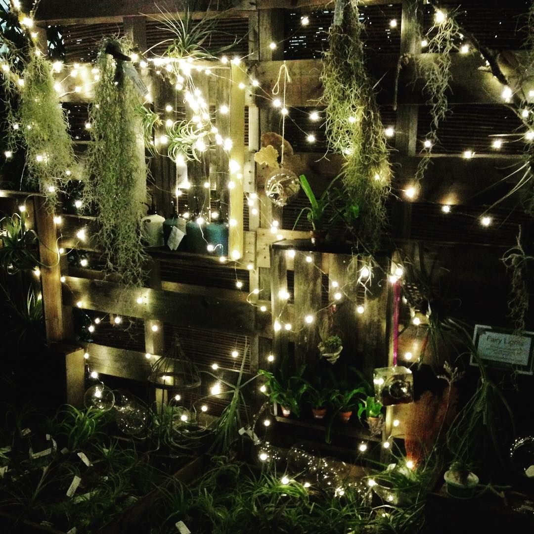 delights lighting. Airplant DeLIGHTS. #fairylights #gardening #gardens #garden #gardensofvancouver #lighting # Delights Lighting T
