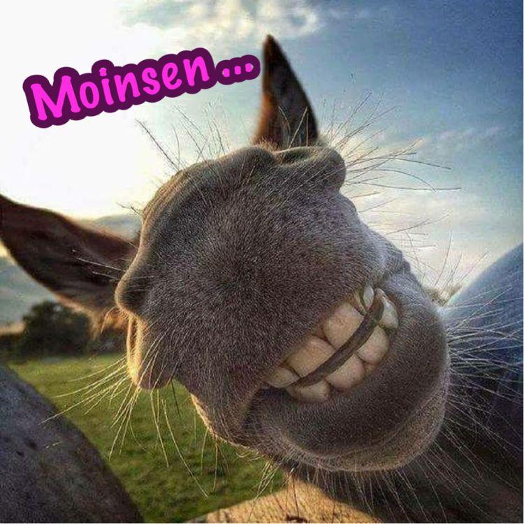 Morgen Milfs Esel