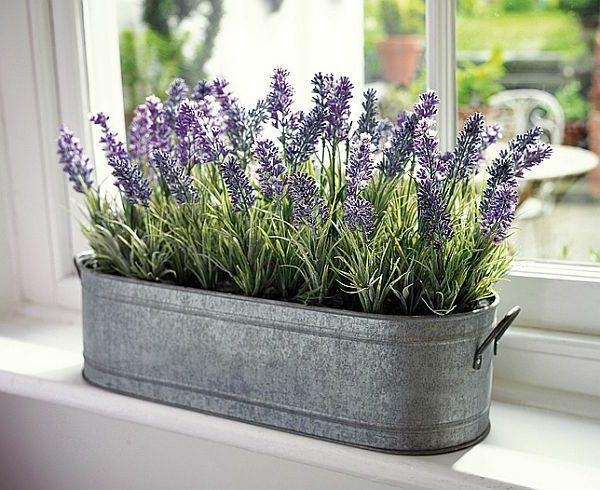 Photo of lavendel for flott dekorasjon hjemme