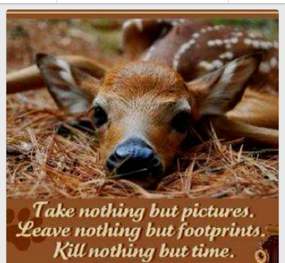 always against hunting if you kill animals you are not a human