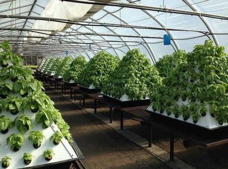 25 best ideas about commercial greenhouse on pinterest commercial. Black Bedroom Furniture Sets. Home Design Ideas